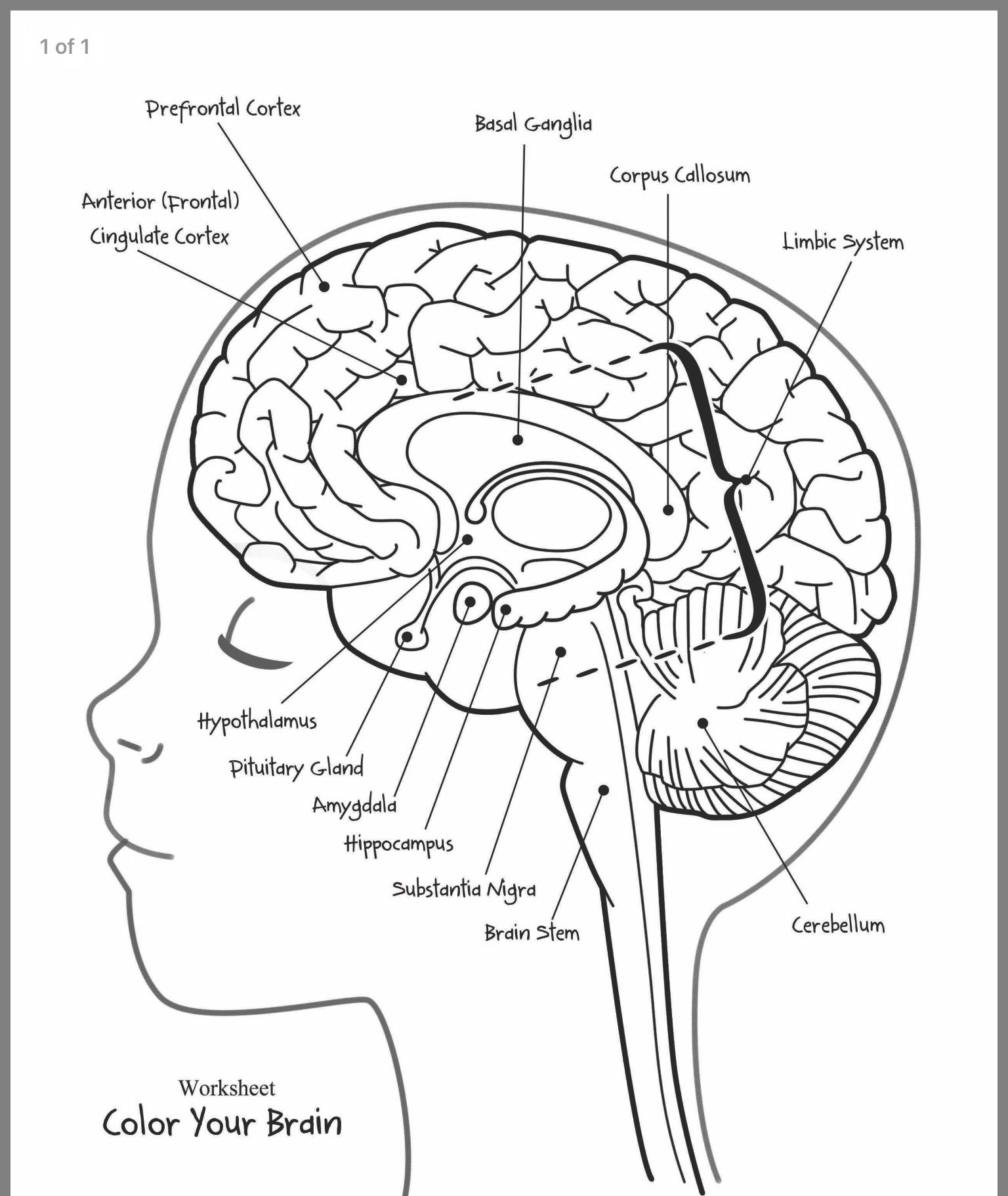 Pin By Simona Petrova On Linguistic Logopedy Brain Anatomy