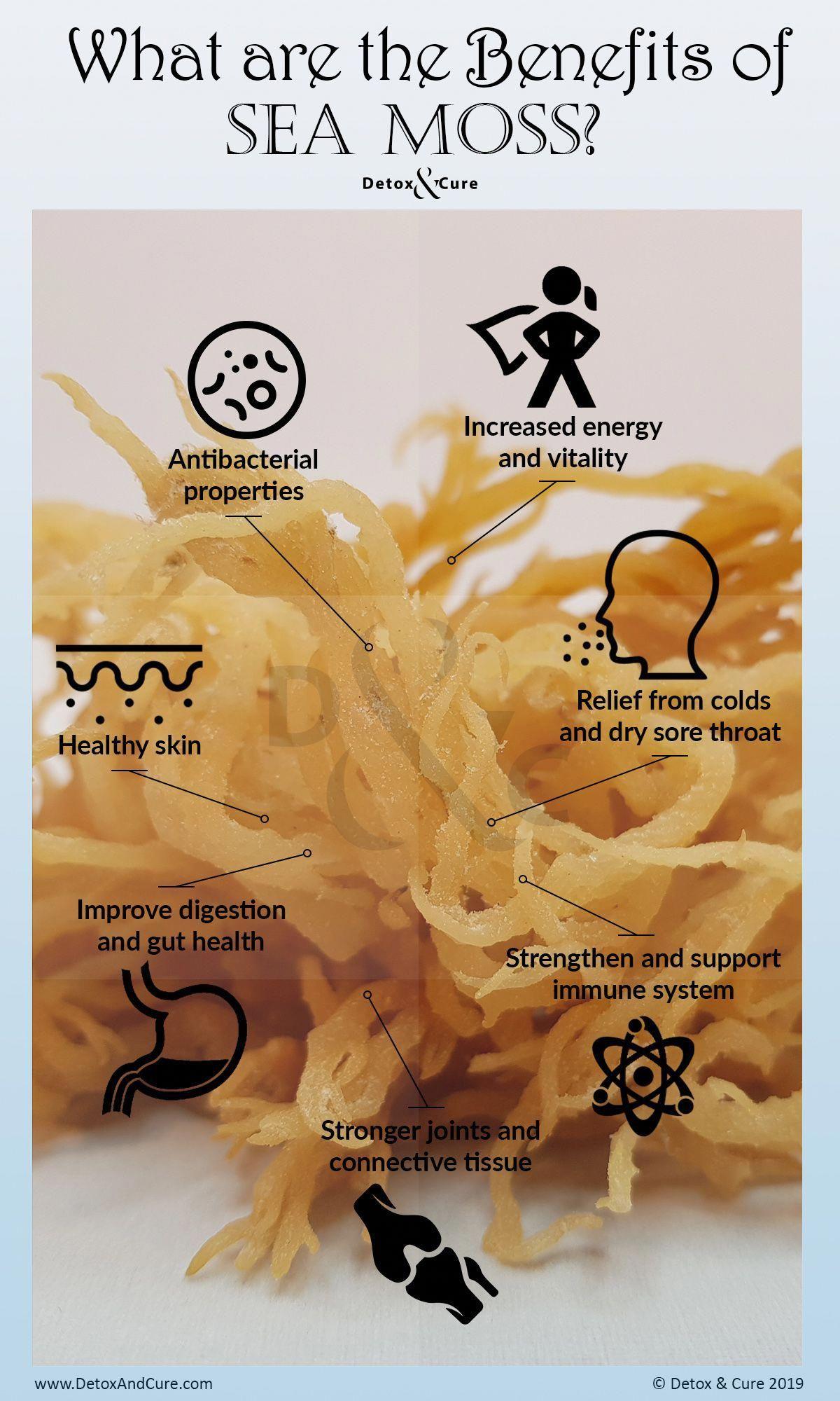 Goodness of seaweed in 2020 sea moss moss seamoss benefits