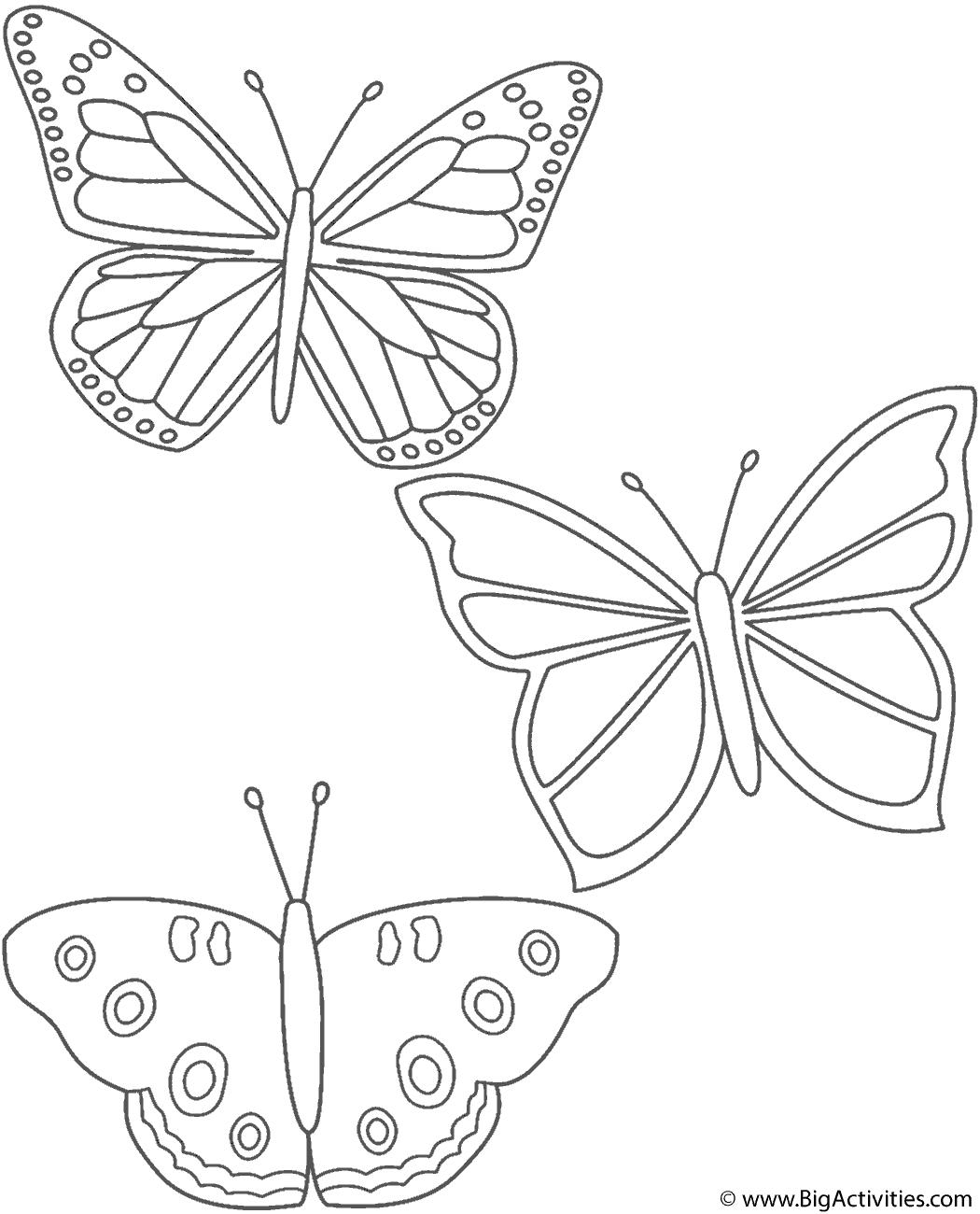 Coloring Page Butterfly Coloring Page Butterfly Illustration Colorful Butterflies [ 1300 x 1050 Pixel ]