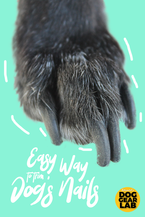 The Easy Way To Trim Your Dog S Nails Dog Training Clipping Dog Nails Dog Nails