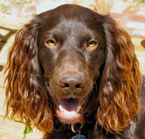 Duck Hunting Supplies and Retriever Training Gear