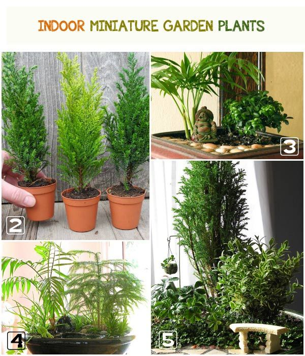 Find Out The Top Recommended Plants For Indoor Miniature Gardens.