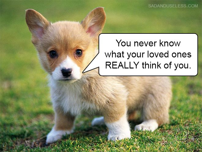 Hard Truths From Baby Animals Cute Animals Animals Beautiful Cute Dog Mixes