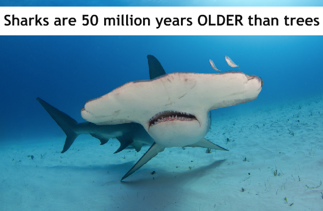 Google Facts on Shark, Galapagos tortoise, Shark week