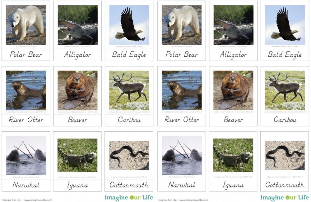 Free Animals of North America Printables from Imagine Our