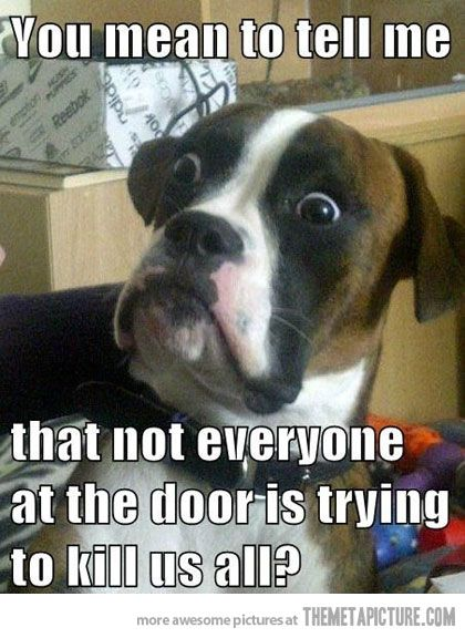 This includes everyone (human and otherwise) within viewing distance of all windows in the house. Bahahahaha ohhhhh Daisy Dog.