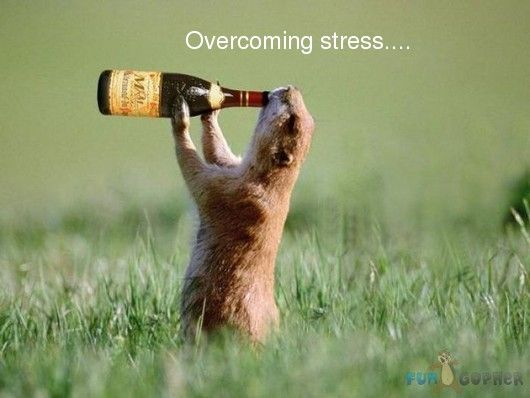 Funny Pictures About Stress | Overcoming Stress - stress ...