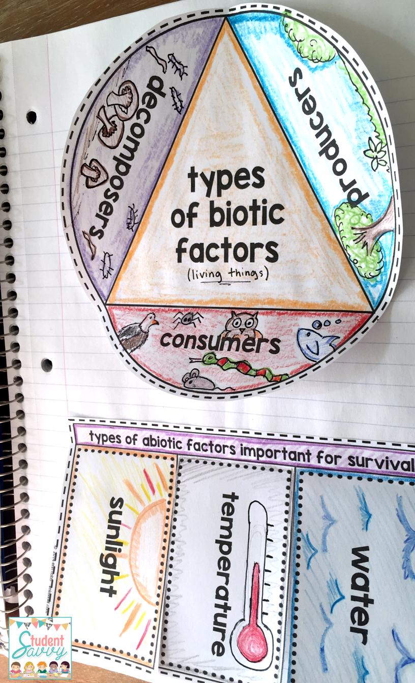Ecosystems Interactive Notebook Ecology | Pinterest | Food webs ...