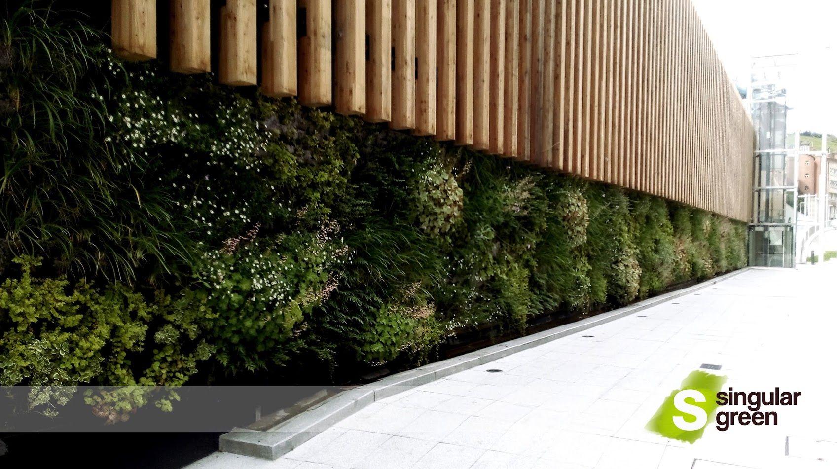 Nuestro Primer Jardin Vertical En Bilbao Con Imagenes Jardines