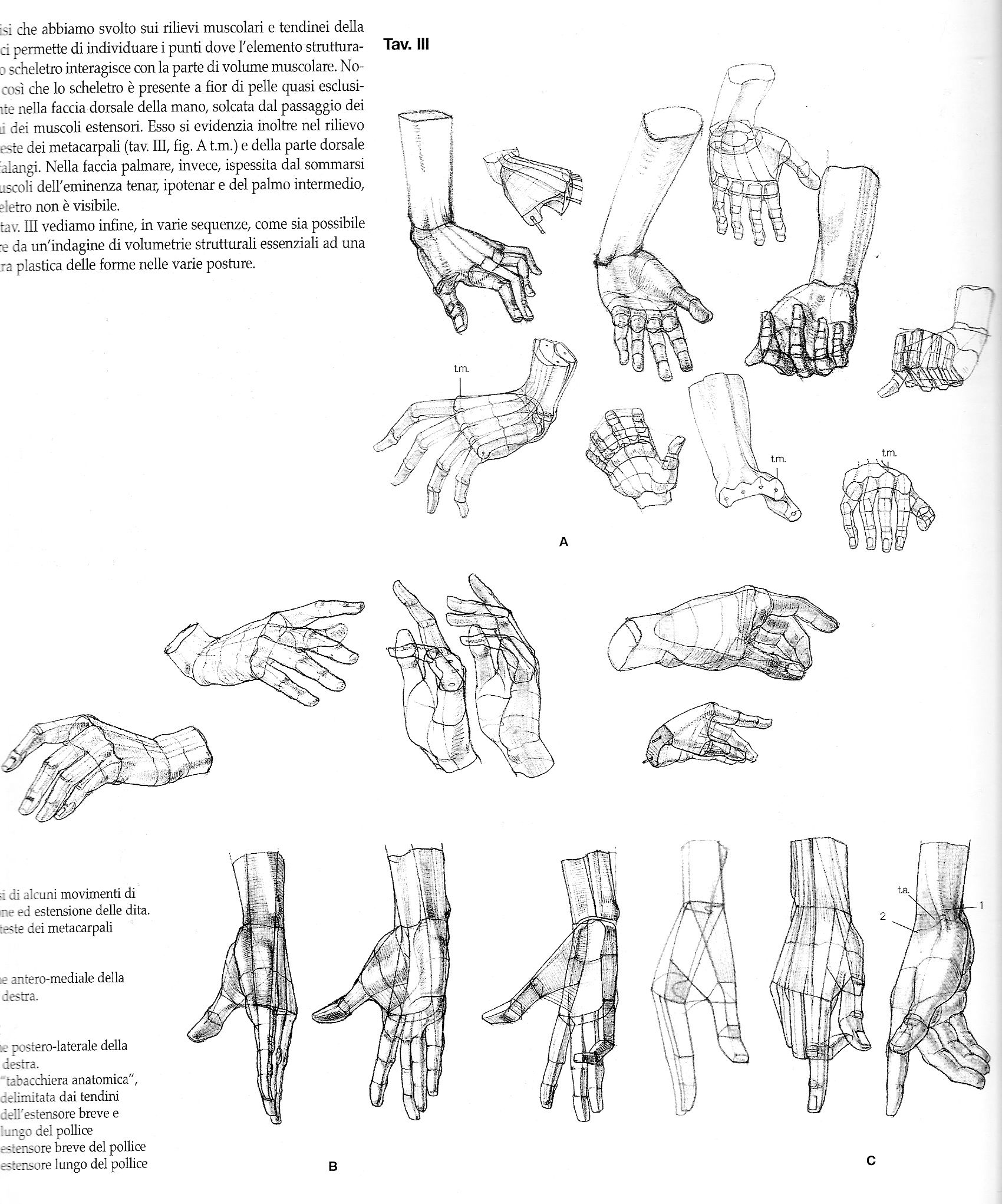 Anatomical drawings of hands from @characterdesigh #anatomy #hand ...