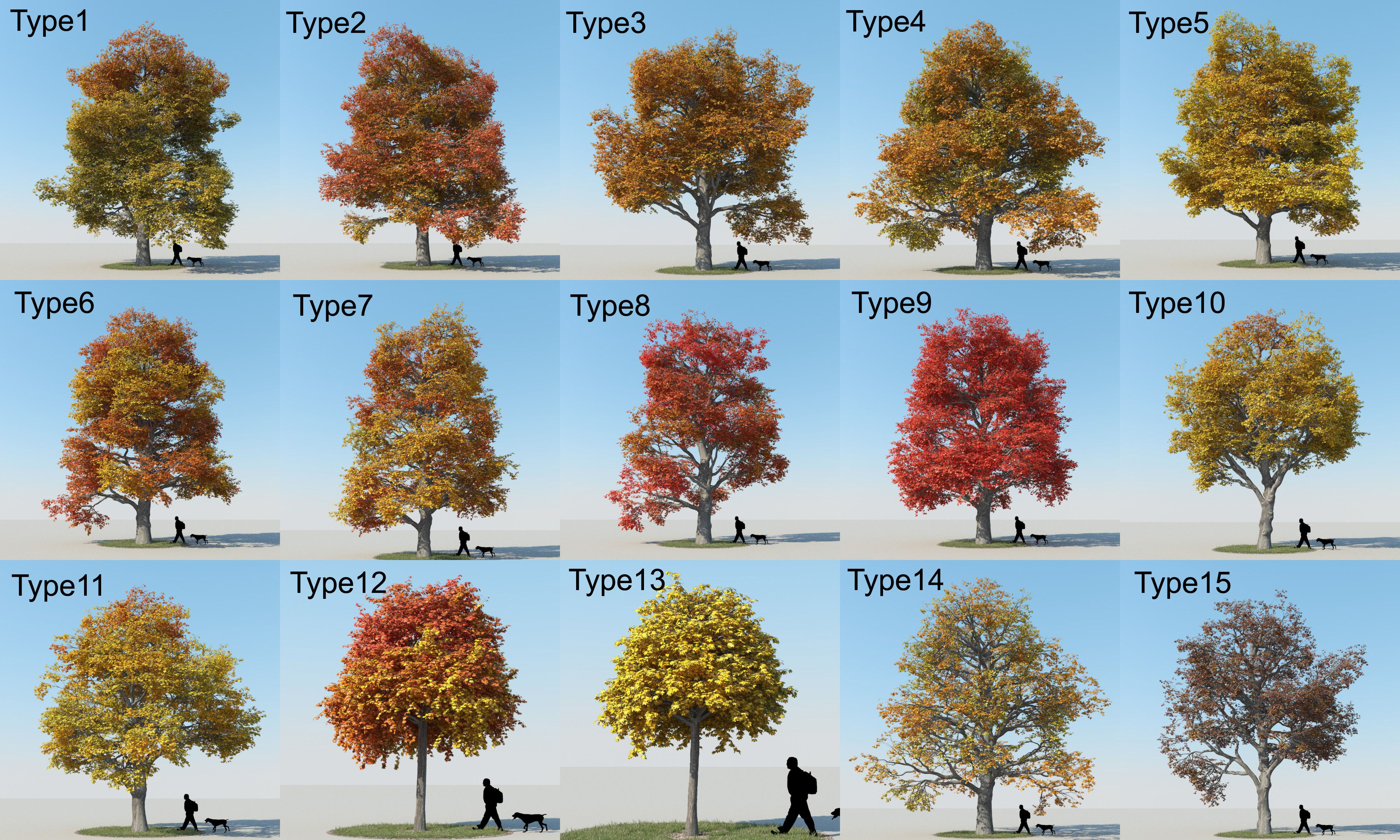 Types Of Maple Tree Leaves