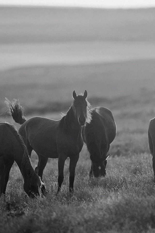 Horses Sunrise Parallax Hd Iphone Ipad Wallpaper Horse Wallpaper Horses Horse Background