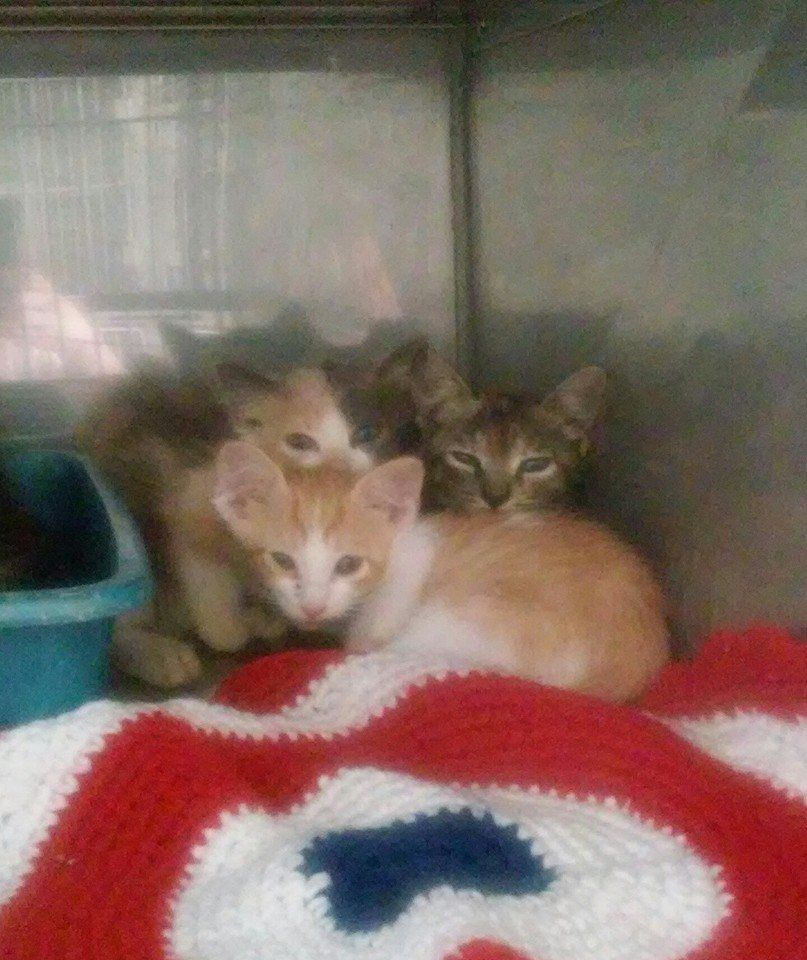 Palatka Fl Owner Surrenders Kittens No Id Putnam County Animal Services 386 329 0396 Or Animalcontrol Putnam Fl These Animals Animals Cat Shelter Kittens