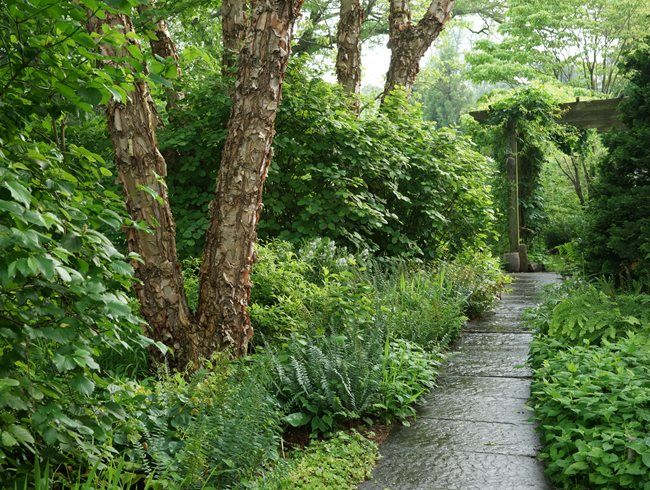 Sustainable Strolling Garden Birch Trees Garden River Birch Landscaping Sustainable Garden