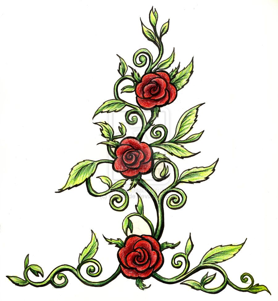 38ec725efb1e roses with thorns drawings