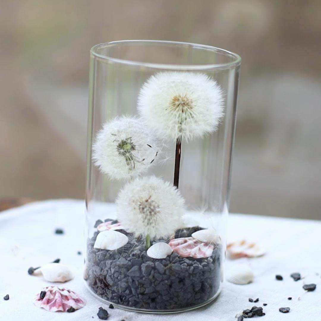 Pusteblumen konservieren und als Deko verwenden