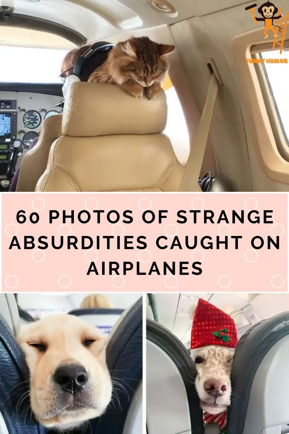 Airplane Halloween Decorations 2020 60 of the strangest absurdities caught on an airplane in 2020