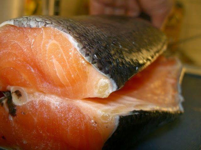 Knallvergnügt Leben: Lachs schwimmt gegen Kalorien-Strom an