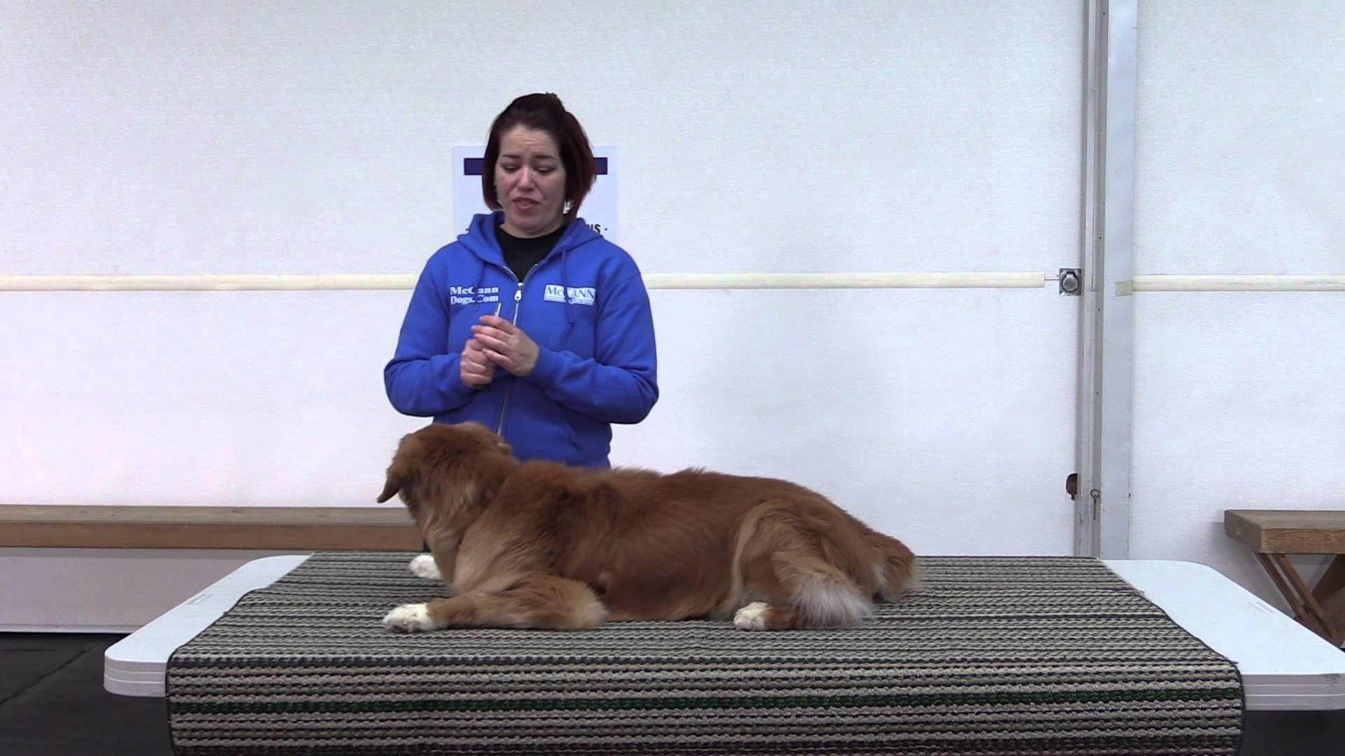 How to trim your dog's toenails Dog toenails, Dog nails