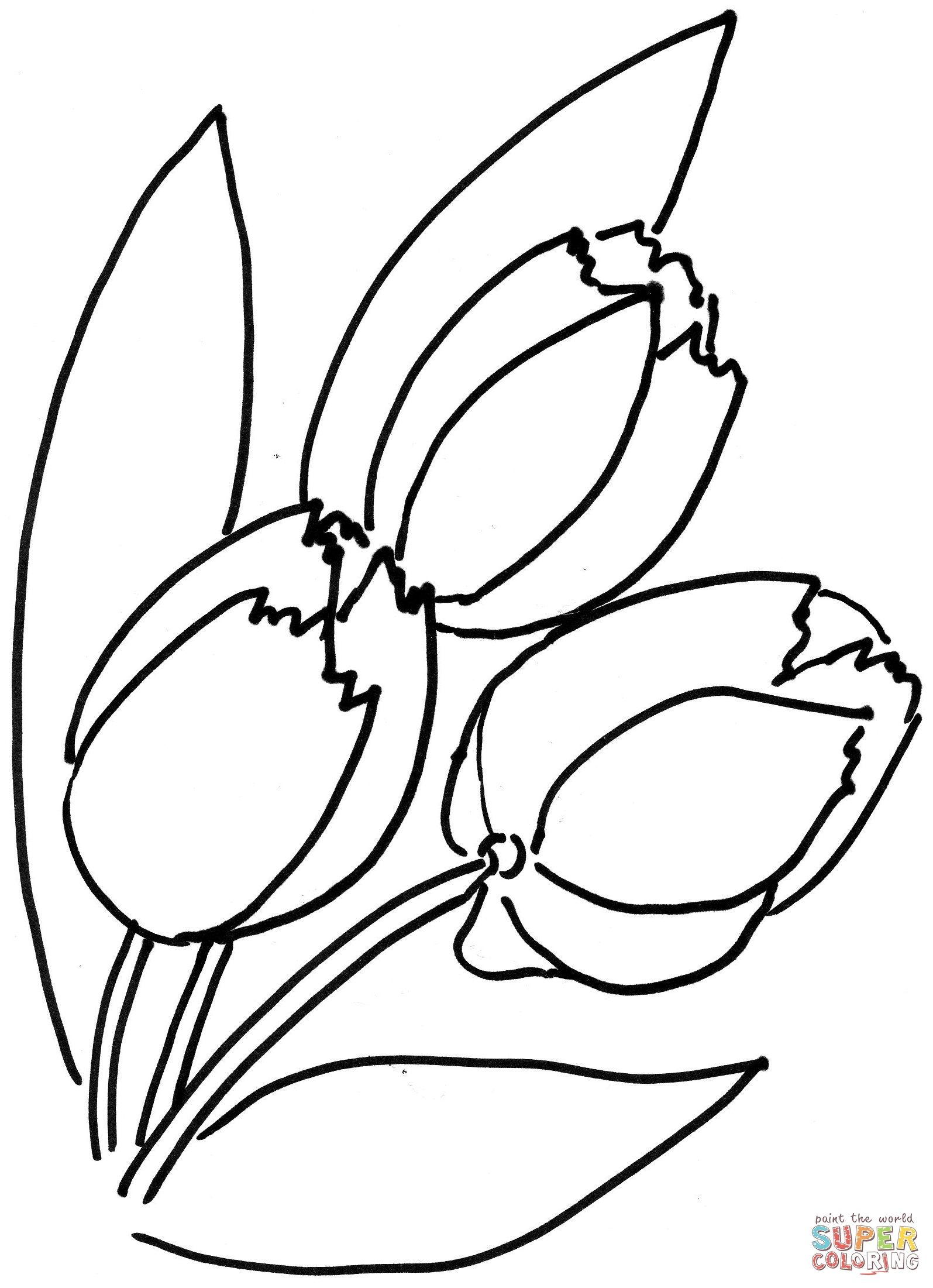Tulips Flower   Super Coloring   Flower coloring pages ...