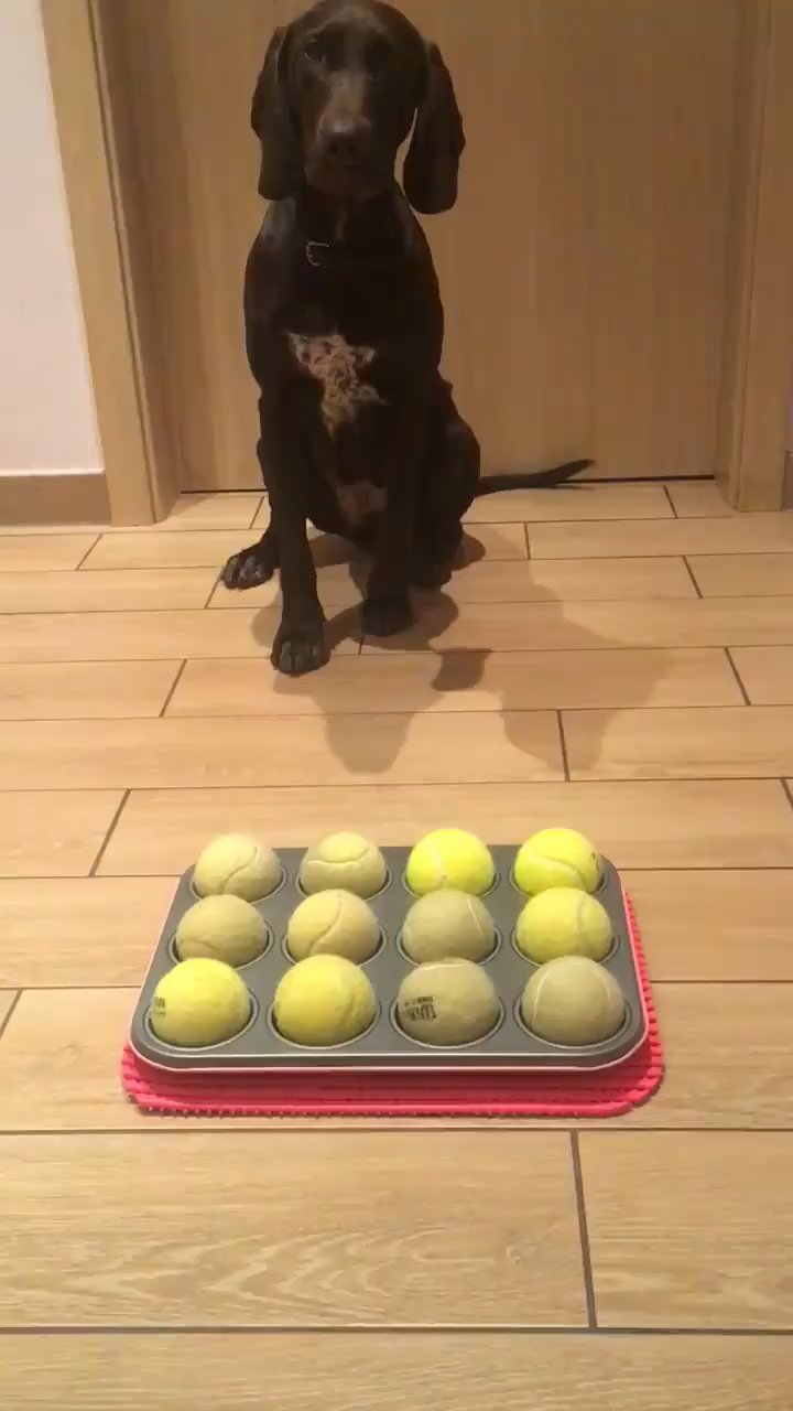 Photo of Great idea 👍 I think it's great, again a great idea to keep your dog busy.