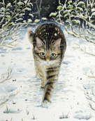 Tabby in the Snow - Celia Pike