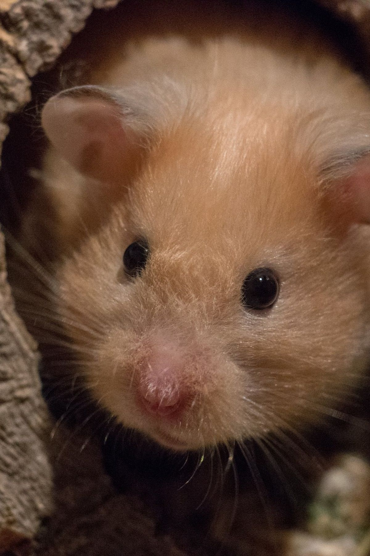 What Do Hamsters Need Here S How To Make Your Own Hamster Starter Kit Small Pets Pet Cremation Hamster