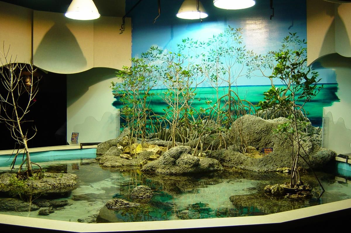 Luxury aquarium decorating aquarium design pinterest for Aquarium decoration set