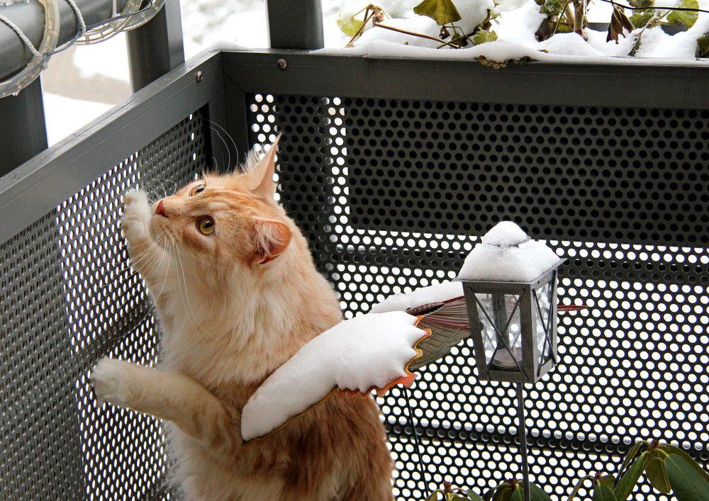 Teddy beobachtet den Schnee... von csphotographie
