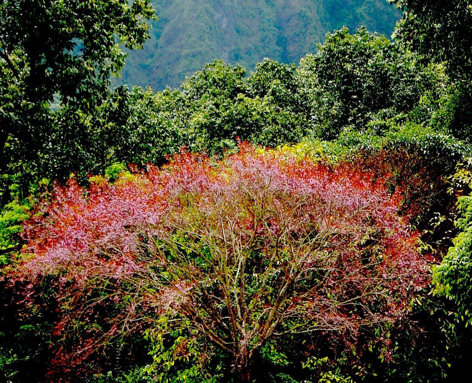 Hoomaluhia Park, Hawaii | My Photographs | Pinterest | Hawaii, Park ...
