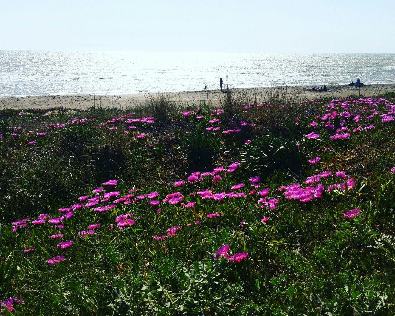 Sea Flowers - Marina di S. Nicola (Italy)