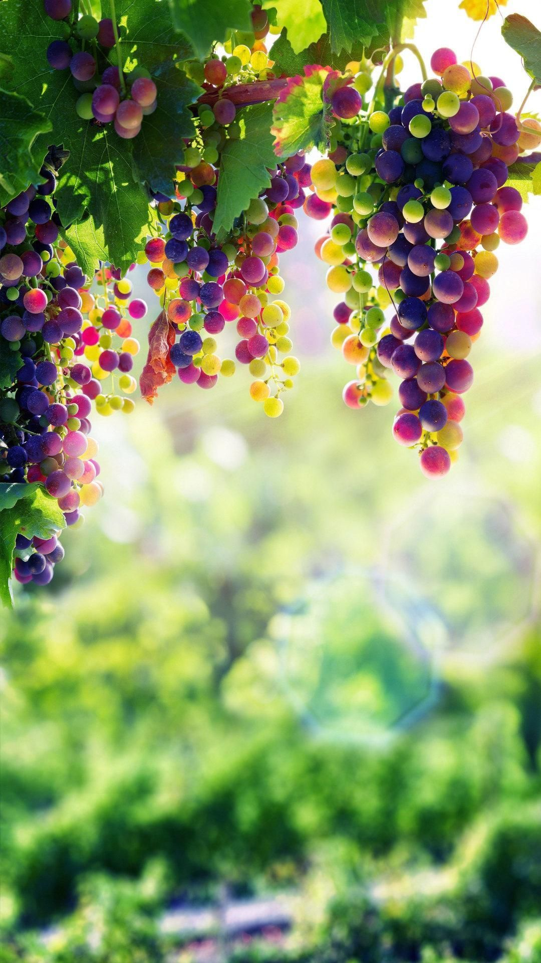 Grapes Wallpaper Best 4k For Android Apk Download Grape Wallpaper Grapes Fruit Wallpaper