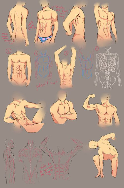 Male Anatomy Study by chi-u on deviantART | Character Drawing ...