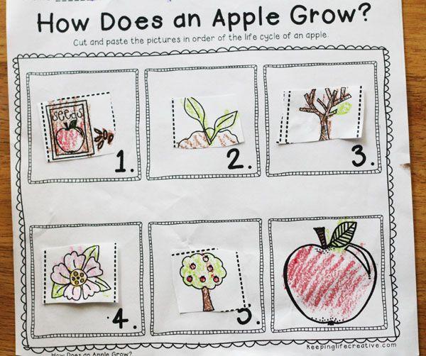 How Does An Apple Grow Apple Tree Life Cycle Tree Life Cycle Life Cycles Kindergarten