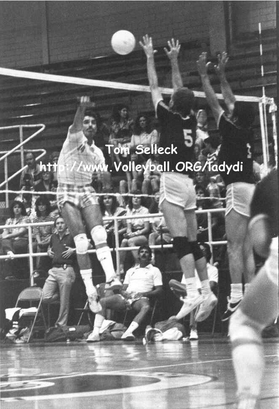 Tom Selleck Actor Volleyball Player Tom Selleck Selleck Toms