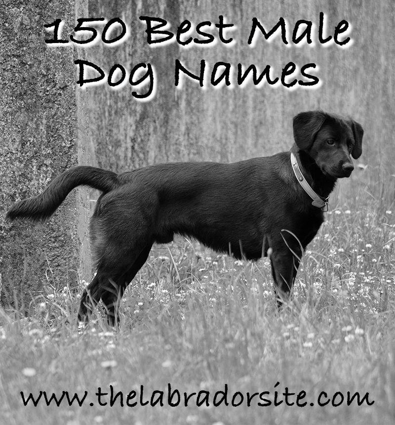 Male Dog Names 150 Brilliant Boy Puppy Name Ideas Dog Names Best Male Dog Names Boy Puppy Names