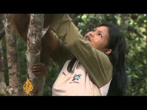 Al Jazeera's Step Vaessen reports from Puruk Cahu, Kalimantan.
