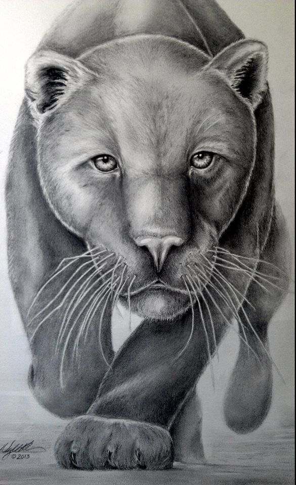 My Panther Drawing Pencil Graphite | My Art | Pinterest | Panthers Drawings And Pencil