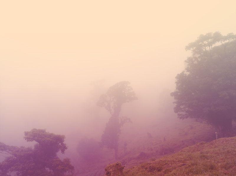 Cloud Forest - Brendan Austin