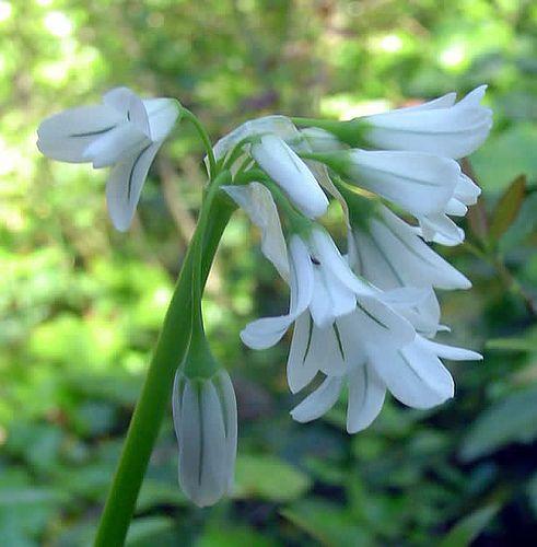 Hermosas Flores Flores Del Mundo Y Sus Nombres Buscar Con Google Hermosas Flores Flores