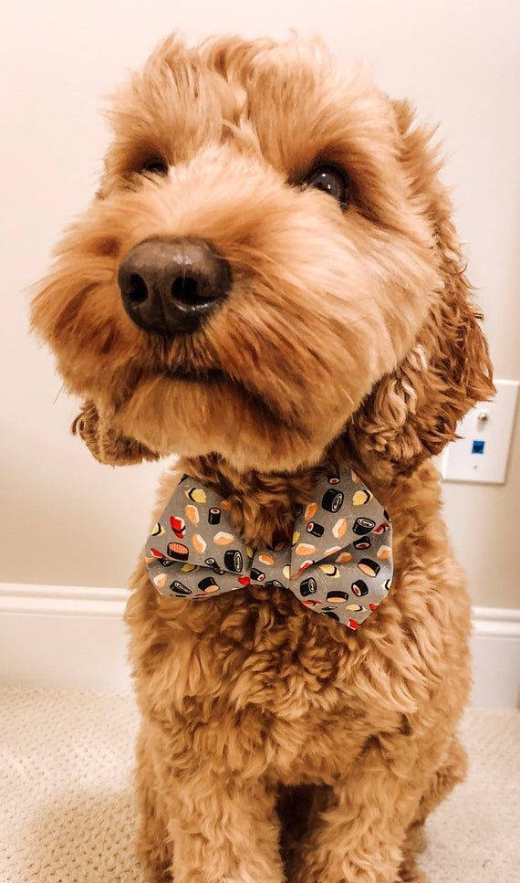 Pin By Emily Anderson On Furry Friends In 2020 Cute Funny Animals Cute Baby Animals Dog Accessories Collar