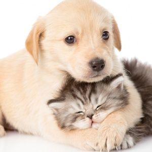 Топ-10: Заблуждения о собаках, в которые мы все верим