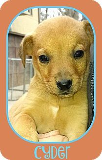 Milton Ga Beagle Mix Meet Cyder A Puppy For Adoption Http