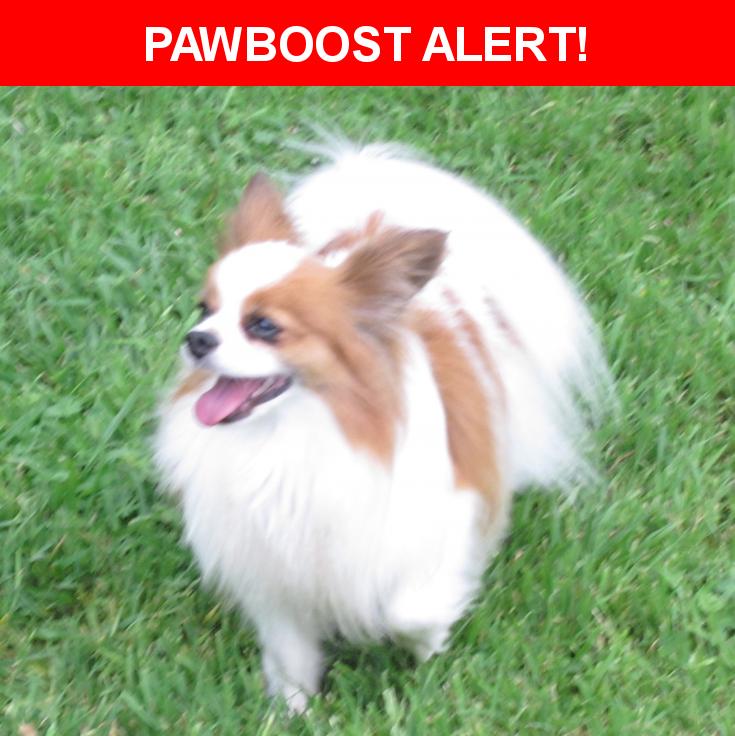 Please spread the word! Buddy was last seen in Tulsa, OK