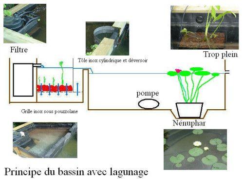 Principe De Construction Du Bassin Et Du Lagunage Bassin De Jardin Bassin Tole Inox