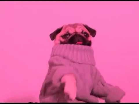 Pug Dancing To Hotline Bling Pugs Hotline Bling Cool Iphone 6 Cases