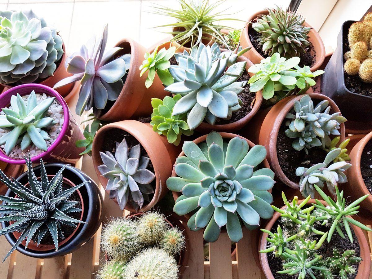Plante Grasse Guide D Entretien Des Succulentes Et Plantes