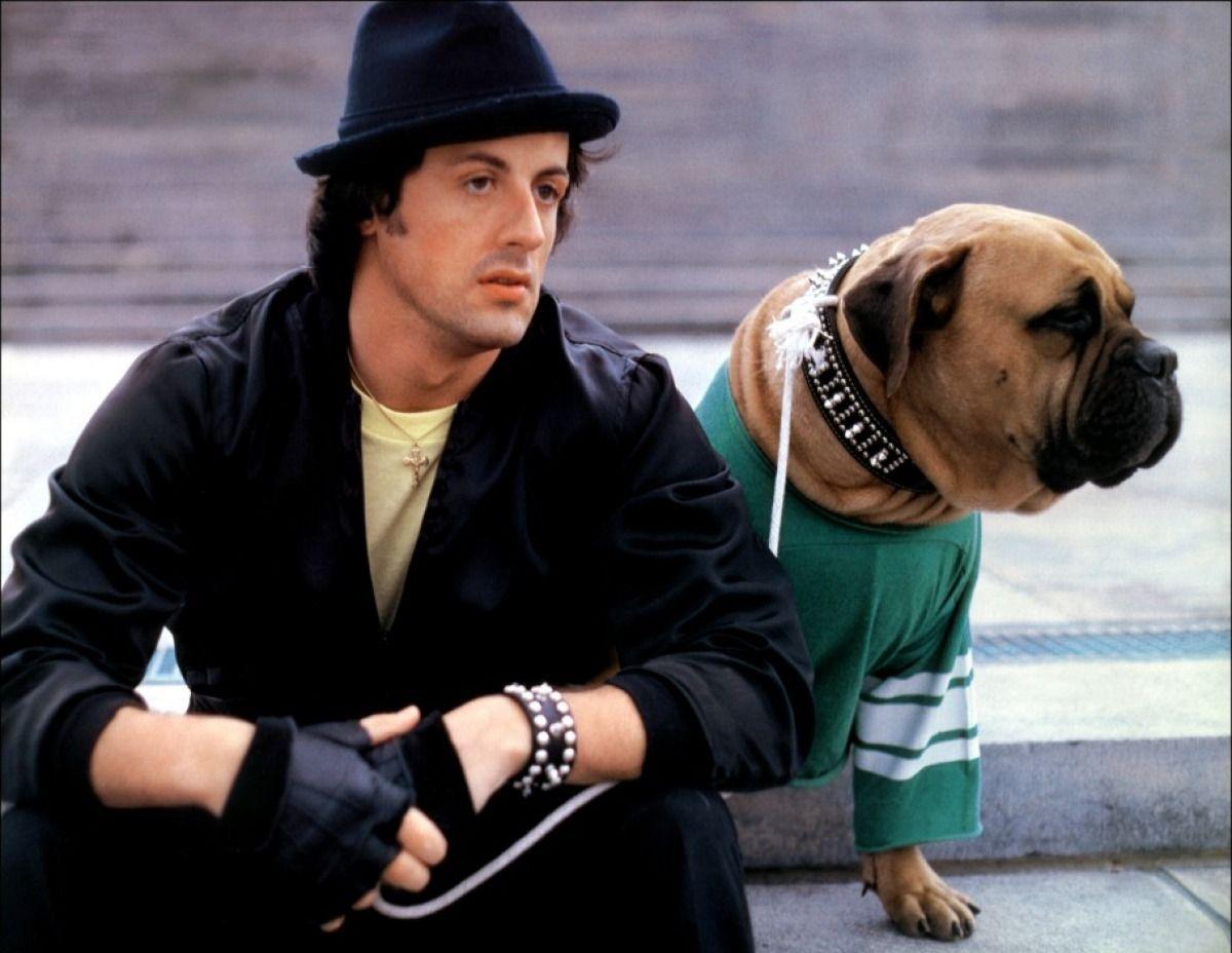 Sylvester Stallone's Best Friend Rocky ii, Sylvester