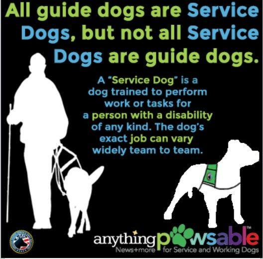 The Dogs Exact Job Can Vary Autism Service Dogs Service Dog