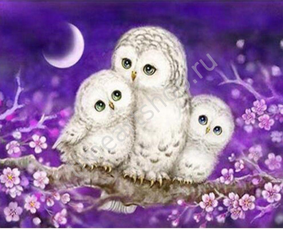 Семья совушек в ночи, картины раскраски по номерам, своими ...